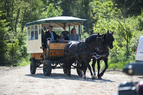 Tur i hestevogn med fuld tilgængelighed i Svinkløv Plantage